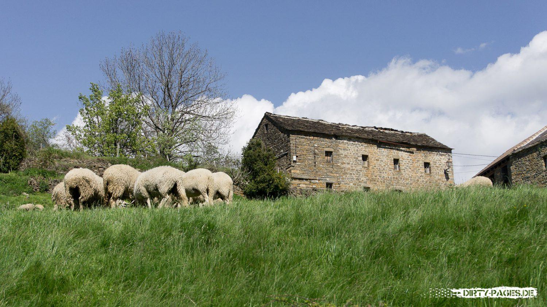 Schafherde in den Pyrenäen